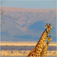 bobil sør afrika