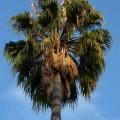 Bobilutleie Phoenix, USA- leie bobilPhoenix, USA